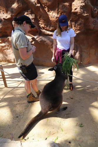 Simona visits the zoo in Australia